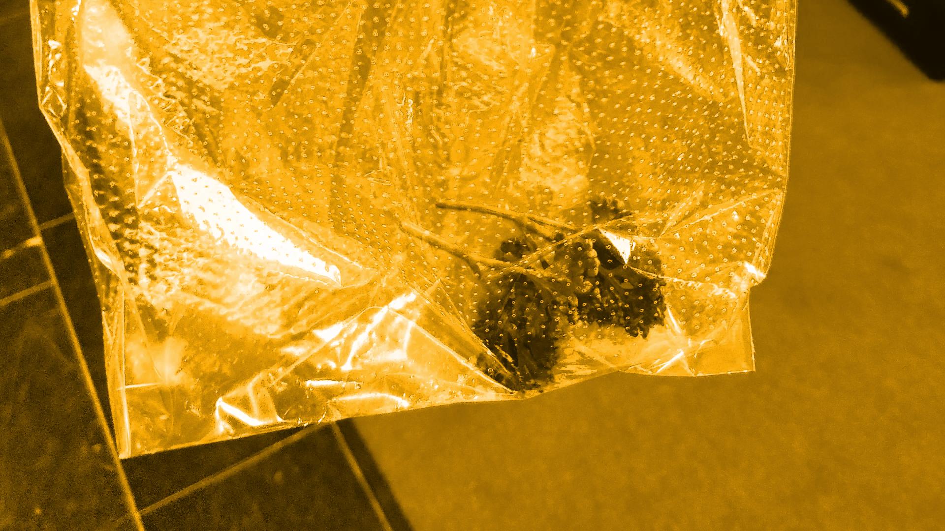 Unboxing Glasbox: Fick die Scheiß Petersilie